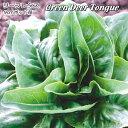 ルーズリーフレタス苗・Green Deer Tongue