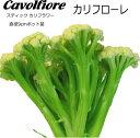カリフローレ(スティックカリフラワー)Cavolfiore苗