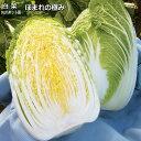 ほまれの極み・白菜苗 5ポットセット