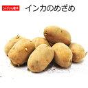 じゃがいも 種芋 インカのめざめ 500g ジャガイモ 【ラッキーシール対応】