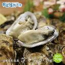 送料無料 松島産 産直 生食可能 さくらかき 50個 活出荷...