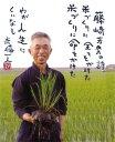 29年産 新米 千葉県産 無農薬玄米 送料無料(1.3升)千...