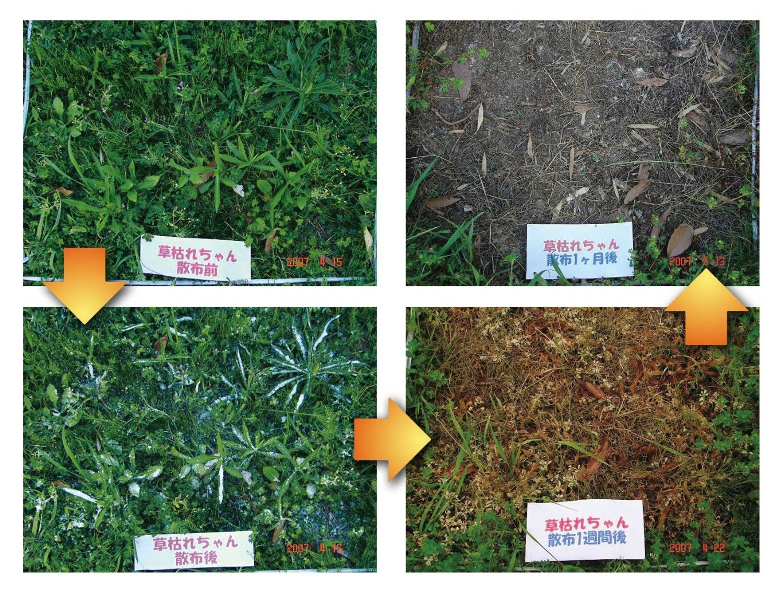 【送料込み】完全無農薬 除草剤 草枯れちゃん ...の紹介画像2