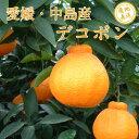 愛媛・中島産 デコポン 贈答用 2kg ノーワックス・防腐剤不使用 サイズ2L〜3L