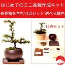 長寿梅 はじめてのミニ盆栽作成キット 選べる鉢色 必要材料と作り方ガイド一式セット【楽ギフ_包装】敬老の日 ギフトプレゼントに