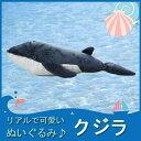 【即日発送】TST ぬいぐるみ101 クジラ 【海の生物】 くじら 鯨 動物 自然 ヌイグルミ おもちゃ クリスマス フィギュア