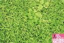 再入荷!【キルティング生地】芝生でゴロン【ぷらんぷ ちぃくす×kokka】キルトだからすぐに使える!作れる!【2013年6月再入荷】【生地・布】