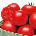 高糖度フルーツトマトの苗 6個セット桃太