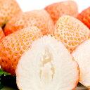 『桃薫(とうくん)イチゴ苗 4個セット』桃のような香りのイチ...