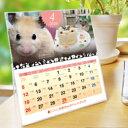 ショッピング卓上カレンダー 2020年 ハムスター・モルモットづくし卓上カレンダー
