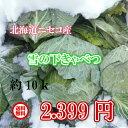 北海道ニセコ産/雪の下きゃべつ/10kg【送料無料※九州・沖...