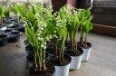 幸福を呼ぶ花「スズラン」 小鉢10個セット