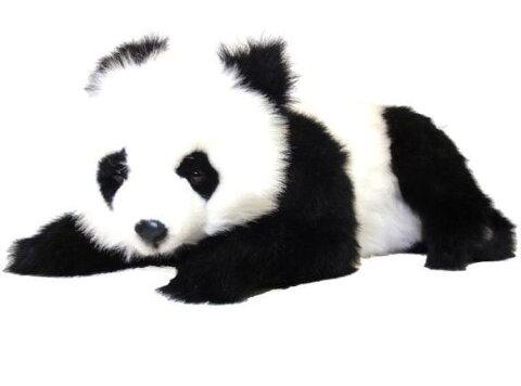 【HANSA】リアルぬいぐるみ仔ジャイアントパンダ 65cm