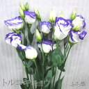 【切花】【選べる福袋対象商品】トルコキキョウ1本◎【仏事】【...