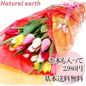 チューリップ20本の花束◎【送料無料】