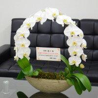 【送料無料】胡蝶蘭大輪『遊美蘭』リング◎【RCP】