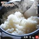 新米30年北海道産 農薬・化学肥料不使用ゆめぴりか玄米5kg【送料無料・数量限定品】