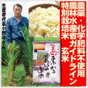 新米28年度産【生命あふれる田んぼのお米・玄米20kg】(4kg×5袋)産地直送