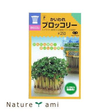 【種】 かいわれ ブロッコリースプラウト 種40ml 3袋セット (郵便配送商品)