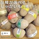 ジャガイモ15品種から選べる!【変わったじゃがいもモバイキング(種イモ)】(野菜苗) 家庭菜園・プラ
