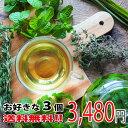 【送料無料】ポイント5倍 健康茶 お買い得 健康サポート 福...