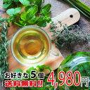 【送料無料】ポイント5倍  健康茶 お買い得 健康サポート ...