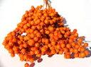 ドライフラワー花材 ペッパーベリー・ペイントオレンジ