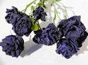 ドライフラワー花材 トルコキキョウ・ブルー