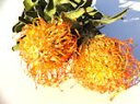 ドライフラワー花材 ピンクッション・オレンジ