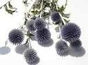 ドライフラワー花材 ベッチーズブルー
