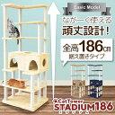 【多頭飼い 大きい猫 シニア 子猫に最適】大型 キャッ