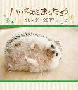 卓上 ハリネズミまるたろう 週めくり [2017年カレンダー][グッズ] / カレンダー