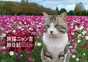 旅猫ニャン吉 旅日記 [2020年カレンダー][グッズ] / カレンダー