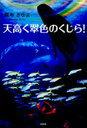 天高く翠色のくじら![本/雑誌] (単行本・ムック) / 翠寿きゆま/著