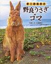 茅ケ崎海岸の野良うさぎゴマ (単行本・ムック) / 内藤雅光/写真+文