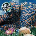 ベリーバトゥン  [SHM-CD] [初回限定生産][CD] / ジェリーフィッシュ