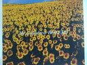 ZC46579【中古】【CD】BOLERO /Mr.Children