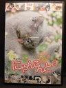 ZD20008【中古】【DVD】にゃんこんと 2