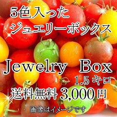 【送料無料】トリアンジュトマト5色入ったジュエリーボックス(パックなし)1.5キロ 3000円(税込)お入れする内容配分につきましては、収穫状況により変わります。ご了承ください
