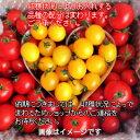 トリアンジュトマト おまかせ ミックス キログラム