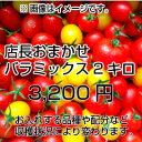 【送料無料】【お祝い】【母の日】当店一番人気!数種類のトマトが入った『店長おまか