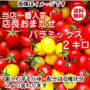 【送料無料】【トマト】【ミニトマト】【父の日】【お祝い】当店一番人気!数種類のト