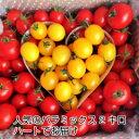 【トマト】【ミニトマト】【条件付きで送料無料】トリアンジュトマト当店一番人気!店