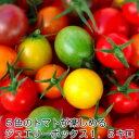 ミニトマト トマト 新鮮 父の日プレゼント 父の日 条件付き送料無料 5色のトマトが入ったジュエリーボックス(パックなし)1.5キロ お..