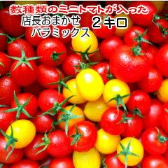 トマト ミニトマト 生産者から直送 宅配便なら全国送