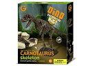 恐竜骨格標本発掘キット カルノタウルス