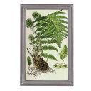 【 DULTON PLANT FRAME E K655-658E 】 ボタニカルアート 植物画 アー