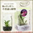 ●【送料無料】【代引不可】メリクロン フローレット 瓶で育つ不思議な植物(蘭(ラン)苗) デンファレ