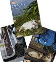 岩合光昭の世界ネコ歩き 第5弾 DVD 全3枚セット