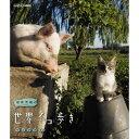 岩合光昭の世界ネコ歩き ウルグアイ ブルーレイ 10P03Dec16